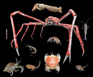 crustace